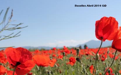 ROSELLES D'ABRIL