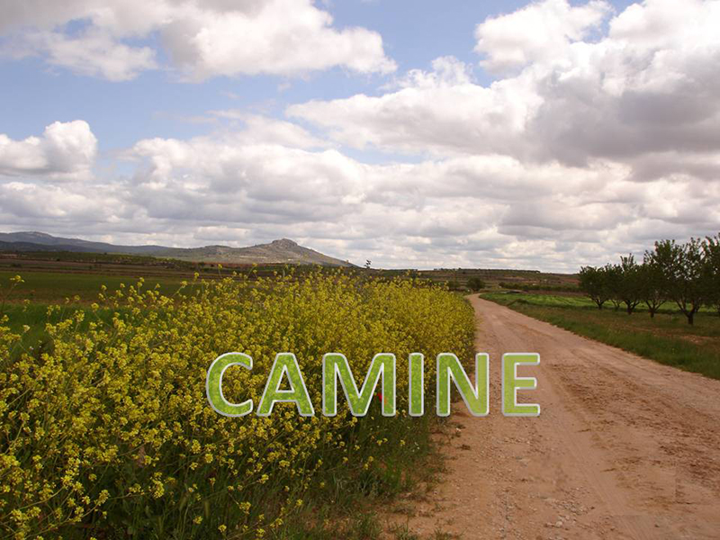 CAMINE II